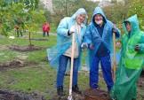 Висадили дерева на Ахматової, не зважаючи на дощ