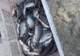 Жандарка поповнилась рибою!